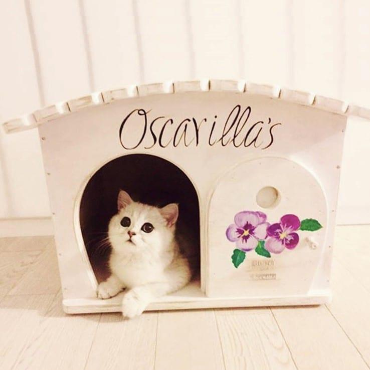 Cuccia per gatti e cani da interno ed esterno in legno personalizzabile con il nome gina - Cuccia per cani interno ...