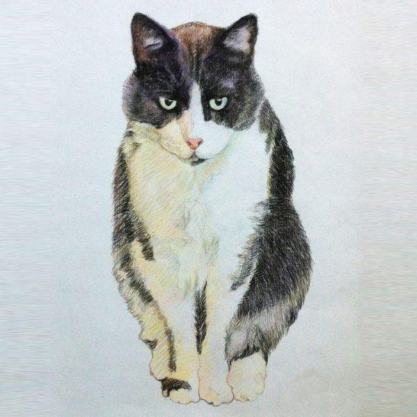 ritratto-gatto-da-foto