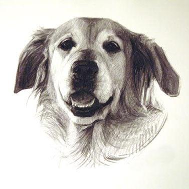 ritratto-matita-cane