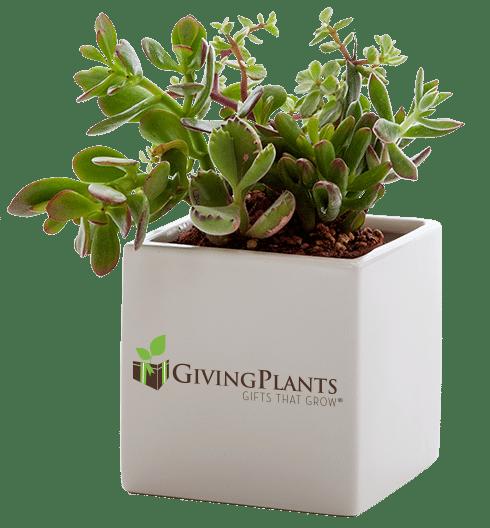 vaso-personalizzato-regalo-aziendale-donna-2